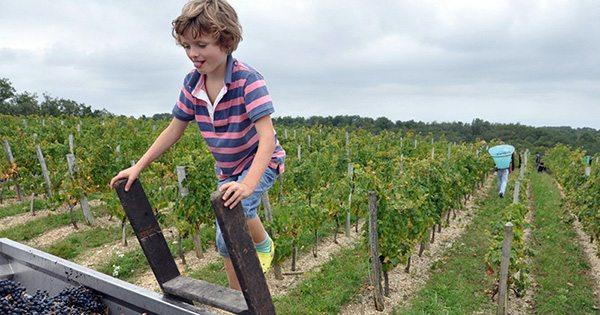 french vineyard boy on ladder